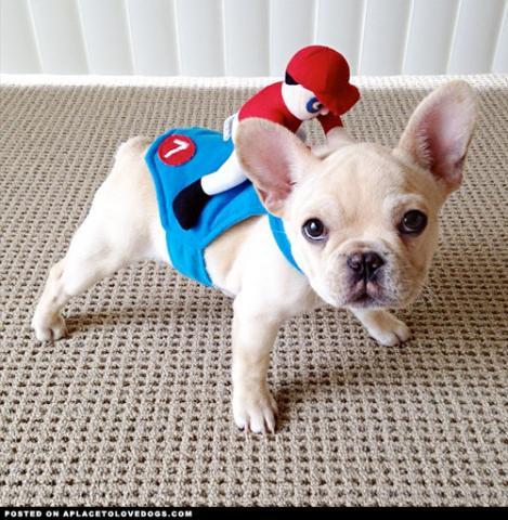 Cachorros Bulldog Frances para adopcion
