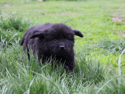 Terranova cachorros encreible
