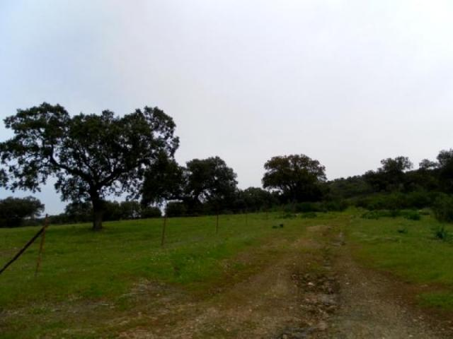 Finca rustica en Espiel, Cordoba