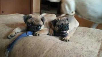 la libertad de buenos hogares perritos del barro amasado