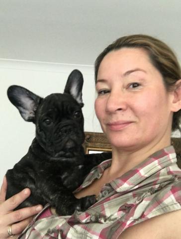 veterinario comprobado cachorros bulldog francés para su aprobaci