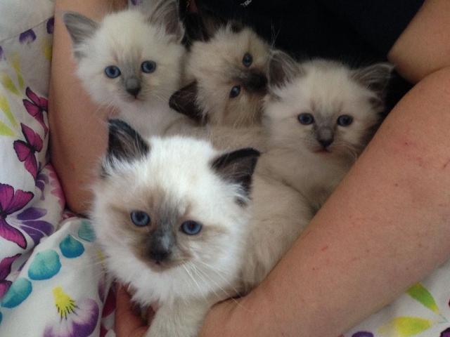 Regalo Cachorros Gatos en Adopcion
