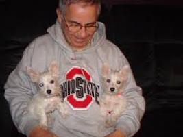 REGALO cachorros westie terrier