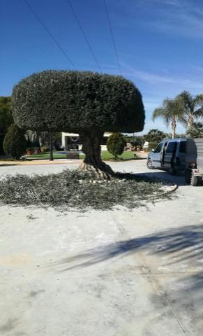 Mantenimento de jardeneria y palmeras