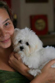 Lorenzo cachorro Bichon maltes para adopcion...