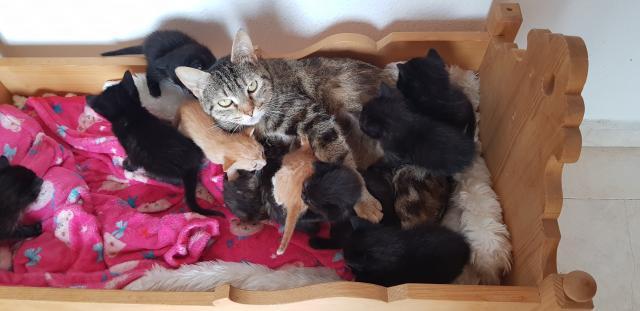 Regalo gatitos con un mes comiendo solitos