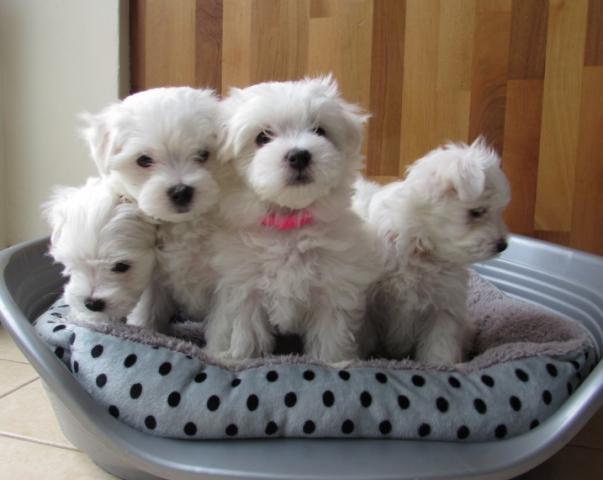 Necesitamos un hogar bueno y afectuoso para nuestros dos Cachorro