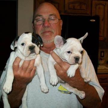 Bulldog frances de Pura Raza Para Adopción