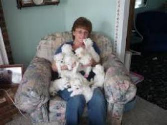 Regalo macho y hembra Bichon maltes cachorros