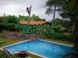 ºofrecemos+poda+tala+de+pinos+663-777-576+olesa,olivella,orista,